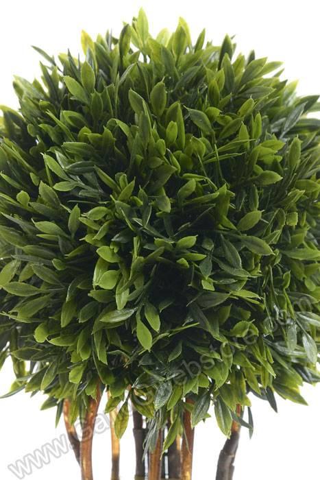 15 Tea Leaf Topiary Plant In Plastic Pot Green