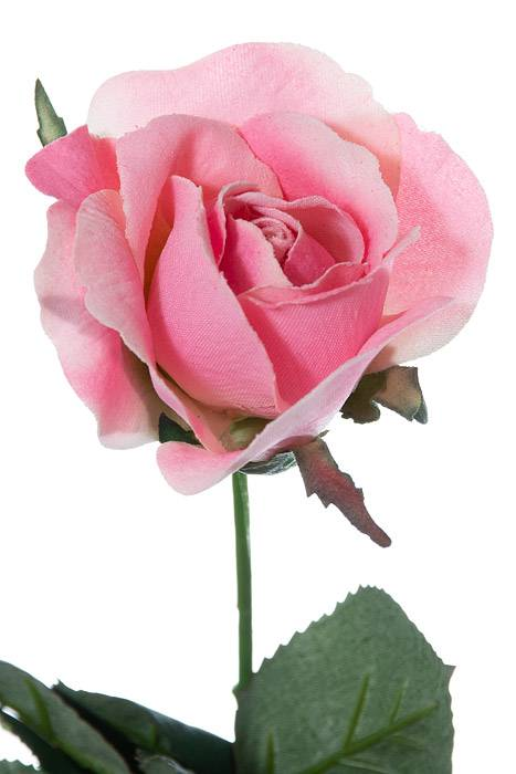 8 5 Quot Rose Pick New Pink