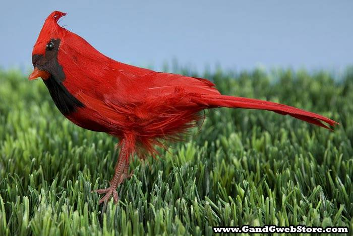 6 Quot Feather Cardinal Bird Red Pkg 12