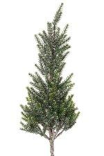 "17"" GL.PINE TREE STEM GREEN/ ICE"