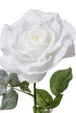 """26.5"""" ROSE WHITE"""