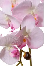 "35.5"" PHALAENOPSIS SPRAY X7 LIGHT PINK"