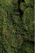 NATURAL REINDEER MOSS GREEN
