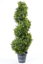 """36"""" BOXWOOD SPIRAL TOPIARY GREEN"""