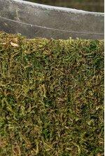 """8"""" CARMEL OLD SOLVANG MOSS PLANTER GREEN"""