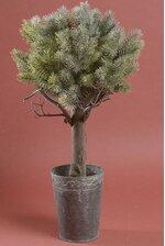 """24"""" PINE TREE IN TIN POT GREEN"""