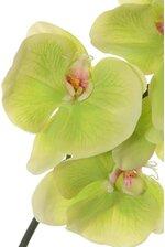 "44"" ORCHID PHALAENOPSIS GREEN"