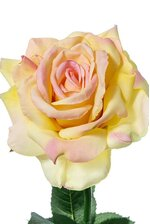 "26"" DIANA ROSE SPRAY PINK/YELLOW"