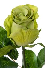 "20"" FRENCH ROSE BUD STEM GREEN"