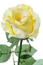 "26"" HALF OPEN ROSE SPRAY SOFT YELLOW PKG/12"