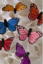 """2"""" FEATHER BUTTERFLY ASSORTED PKG/12"""