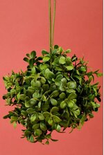 "6"" BOXWOOD BALL GREEN"