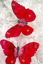 """5"""" BUTTERFLY RED PKG/12"""