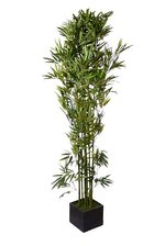 6FT BAMBOO TREE W/WOODEN POT GREEN