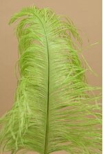 """14""""-16"""" SINGLE OSTRICH FEATHER LIME GREEN"""