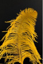 """14""""-16"""" SINGLE OSTRICH FEATHER GOLD"""