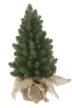 """22"""" X 11"""" CANADIAN PINE TREE WRAPPED IN BURLAP GREEN"""