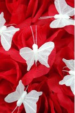 "1"" MINI BUTTERFLY WHITE PKG/12"