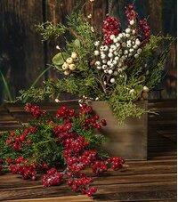 Christmas Holy Berries