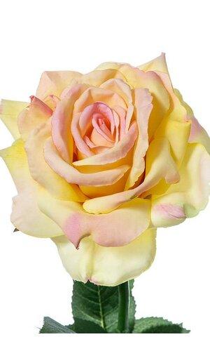 "26"" DIANA ROSE SPRAY PINK/YELLOW"