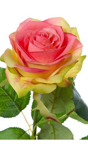 "27.5"" CONFETTI ROSE SPRAY ROSE"