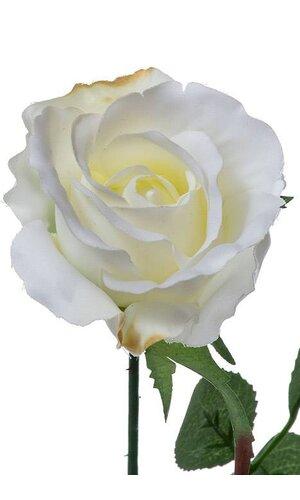 "27"" ROSE BUD SPRAY CREAM/WHITE PKG/12"