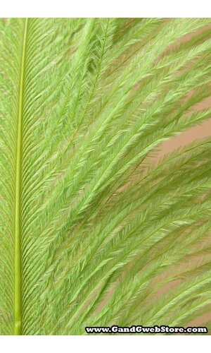"""18""""-22"""" OSTRICH FEATHER LIME PKG/12"""